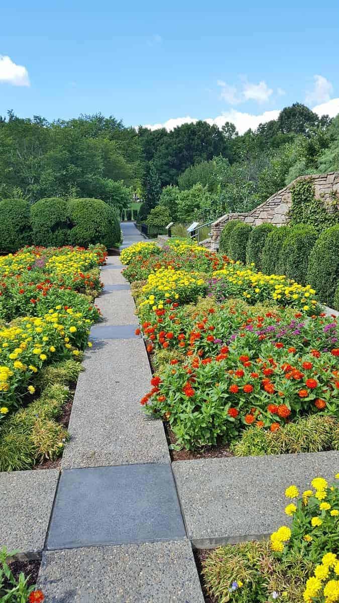 Flowers at NC Arboretum