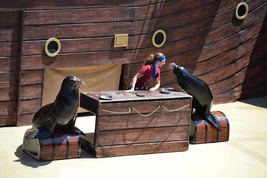 Sea Lion Show at Sea World