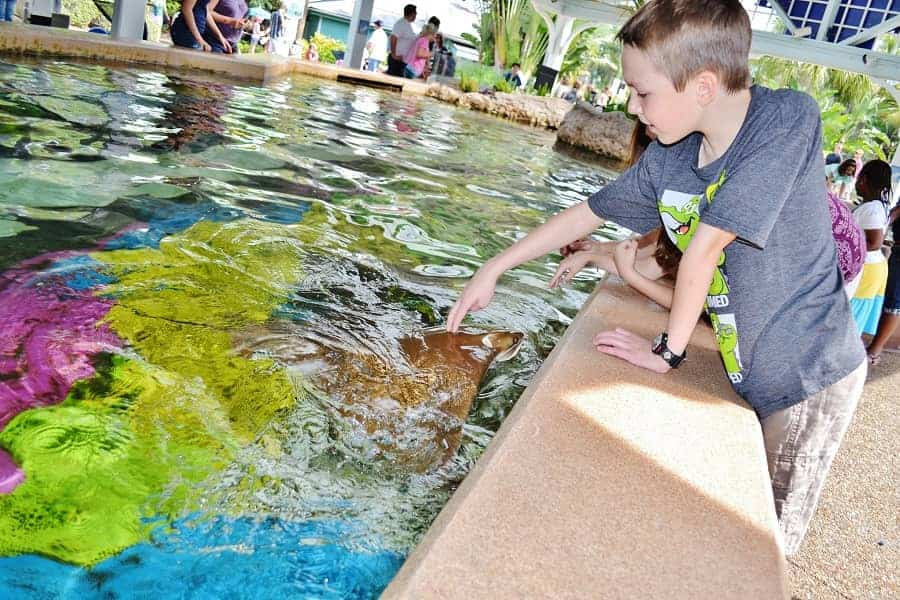 Sting Ray Encounter at Sea World