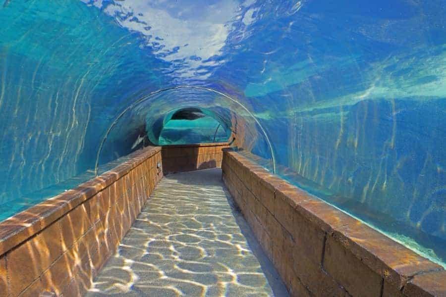 Atlantis Bahamas Aquarium Tunnel