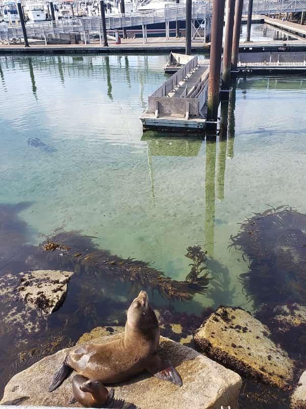 Coast Guard Pier in Monterey