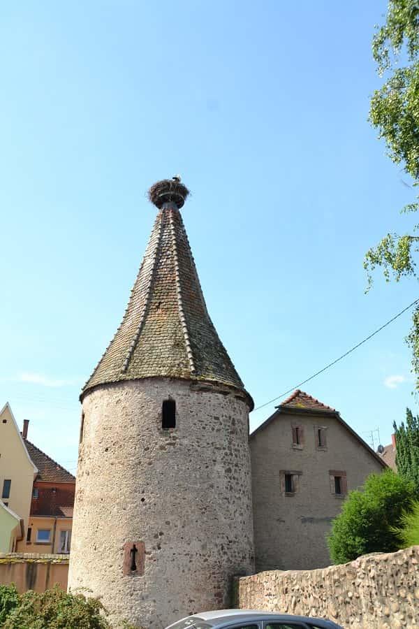 Storks Nest in Ribeauvillé France