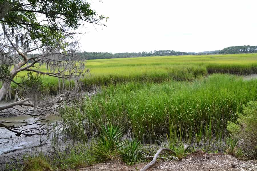 Wormsloe Marsh